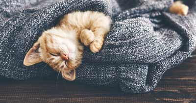 cosy cat home emergency