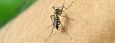 zika virus tips mosquito